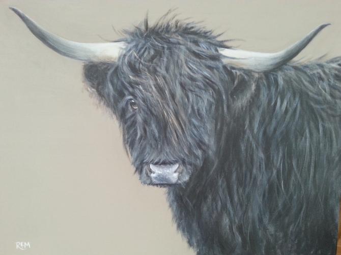 Black Highland Coo