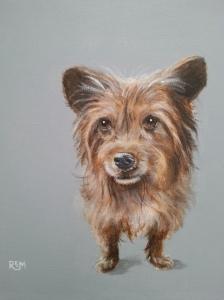 Scruff, acrylic on canvas, 30 x 30cm