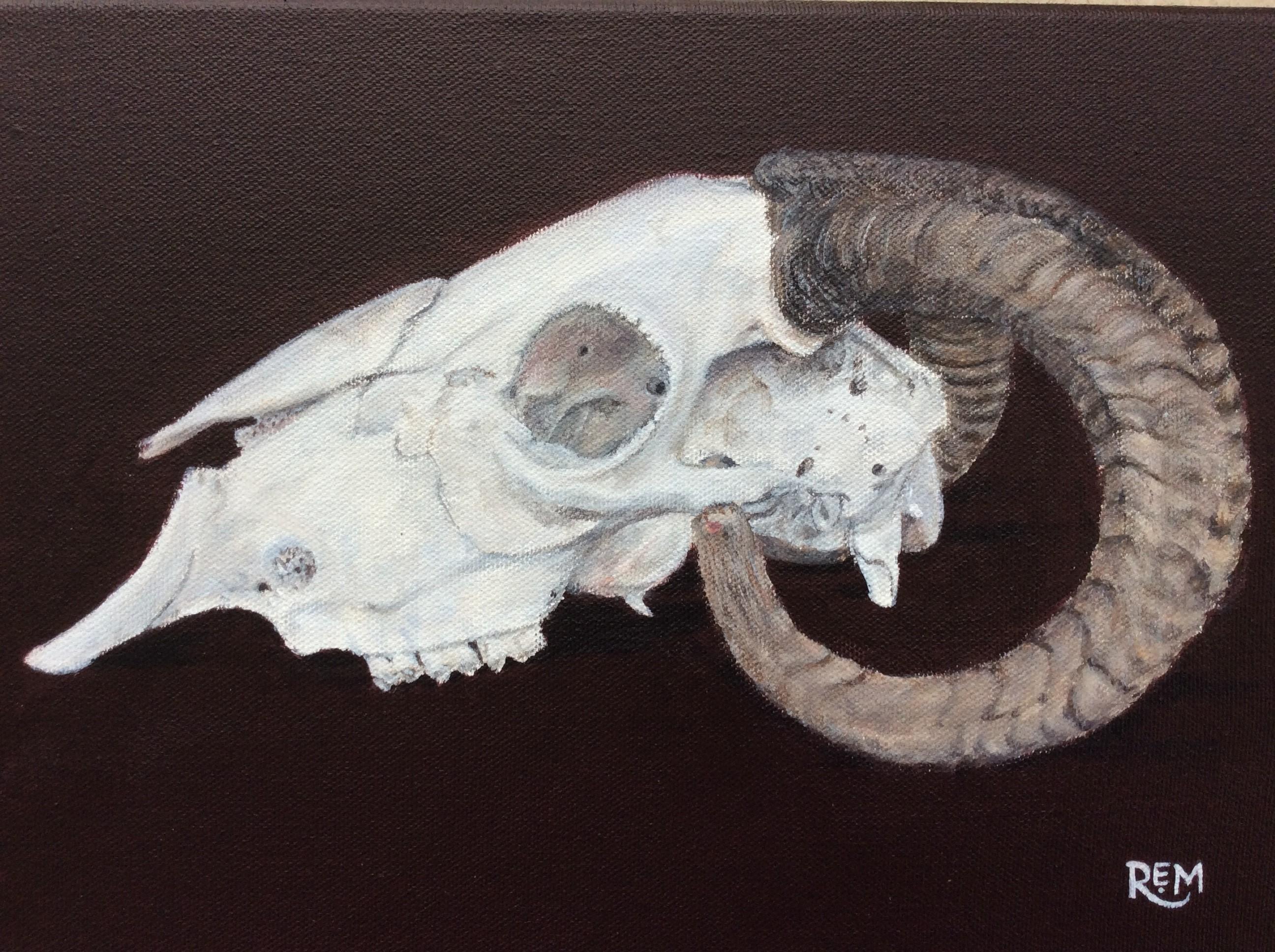 Herdwick Ram Skull